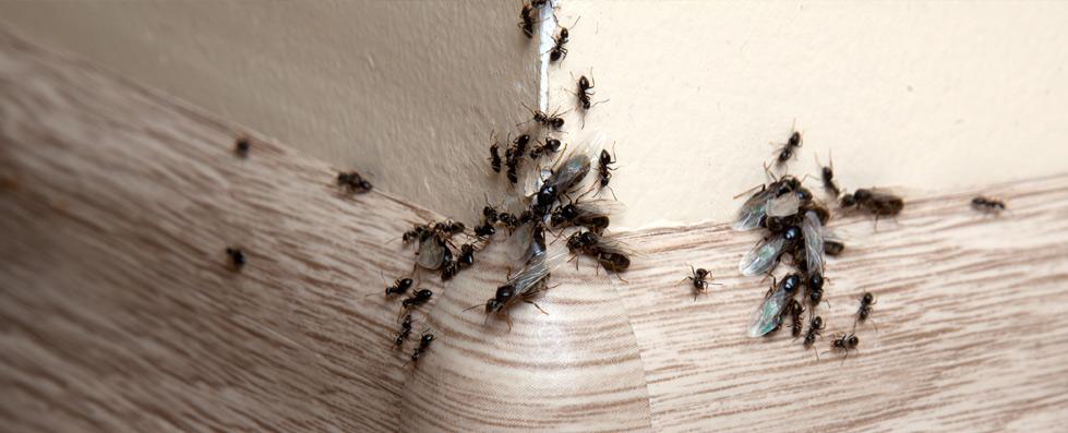 ant control glasgow