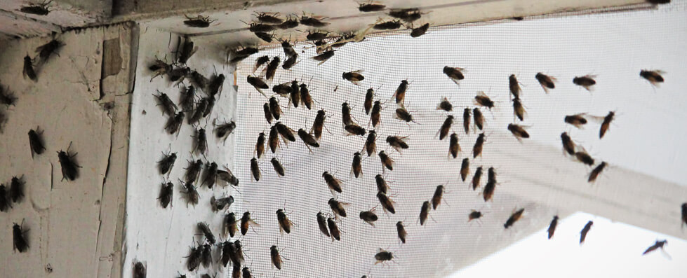 insect removal glasgow