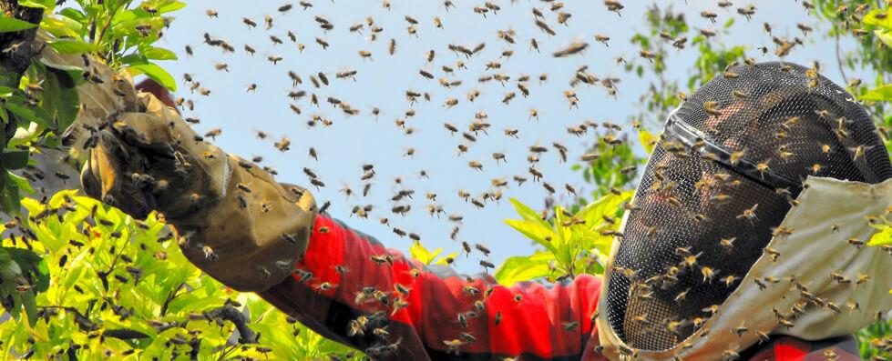 wasp control glasgow
