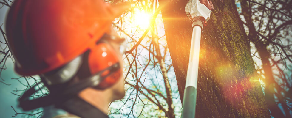 why you need the experts in garden clearance